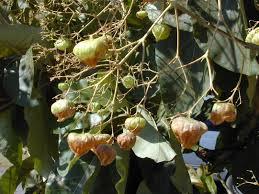 TECK1 - fruit ...
